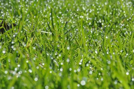 Albion Lawns with Morning Dew